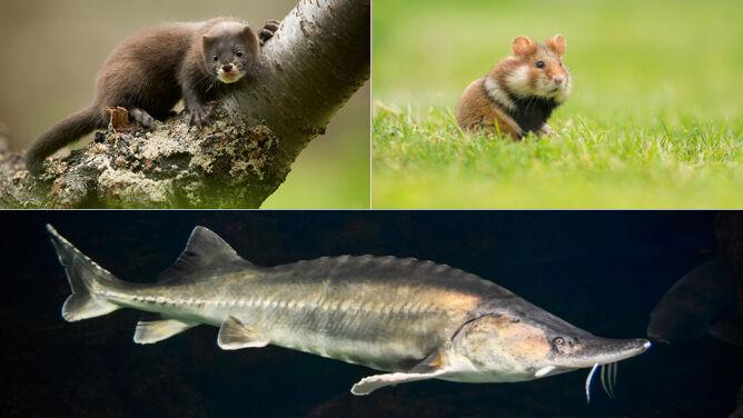 """Parlament Europejski chce """"porozumienia paryskiego"""", które chroniłoby bioróżnorodność"""