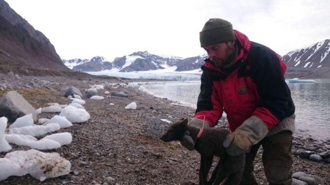 Pokonała dystans 3,5 tysiąca kilometrów (Elise Strømseng/Norwegian Polar Institute)
