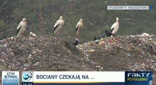 Bociany czekają na wiosnę (TVN24)